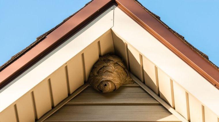 nido de avispas en lo alto