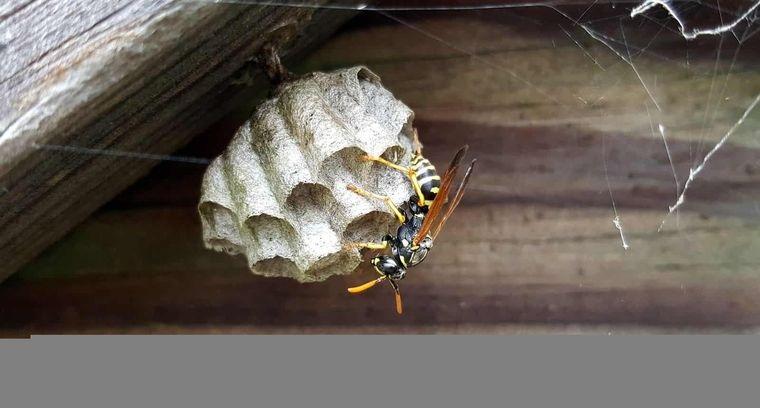 nido de avispas en techos exteriores