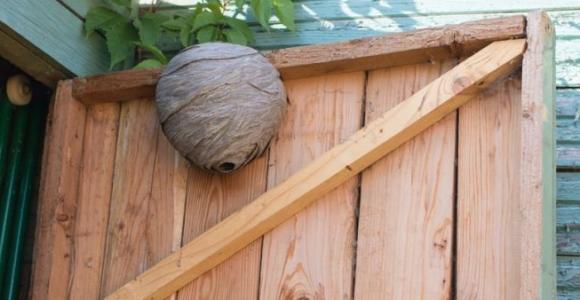 nido de avispas peligroso