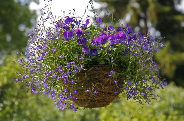 Plantas colgantes de exterior-lobelia