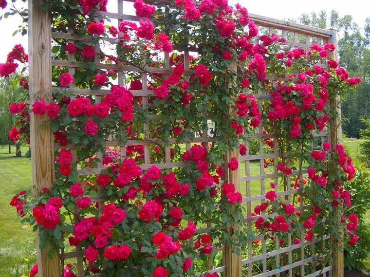 plantas-colgantes-de-exterior-rosas-rojas