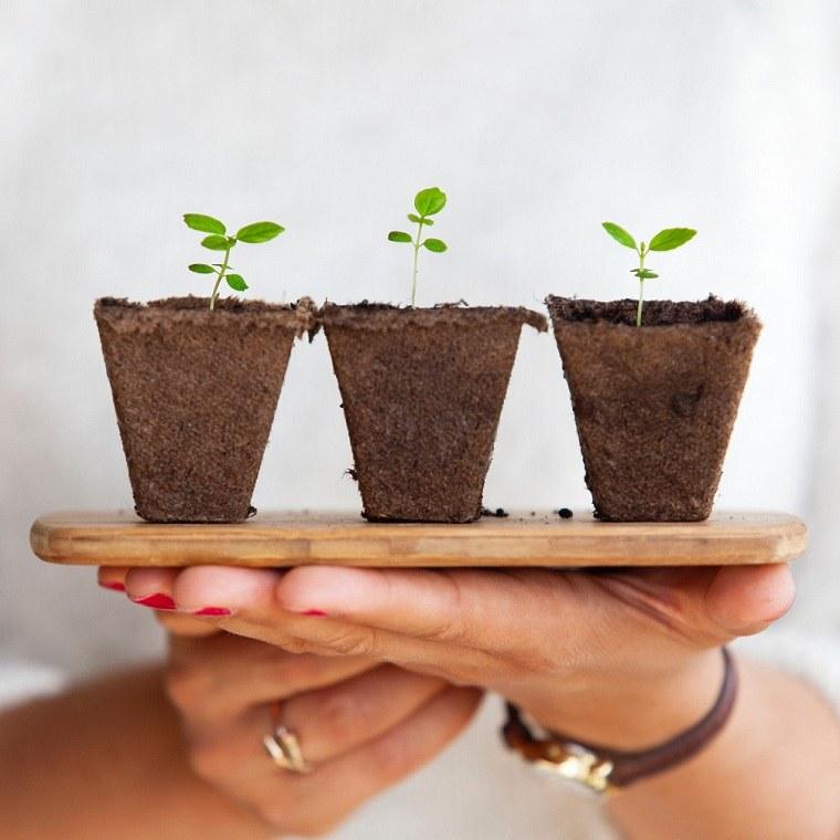 posos-de-cafe-maneras-utilizar-fertilizante-plantas