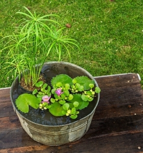 Fotos-de-nenufares-cultivar-estanque-pequeno