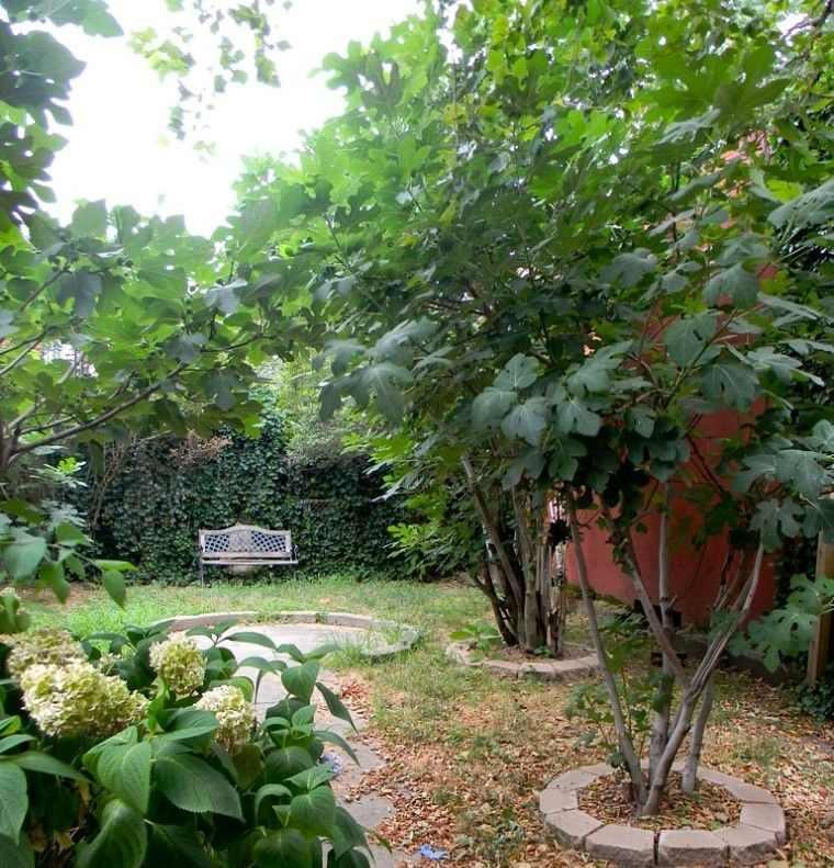 árboles para jardín arbol de higos