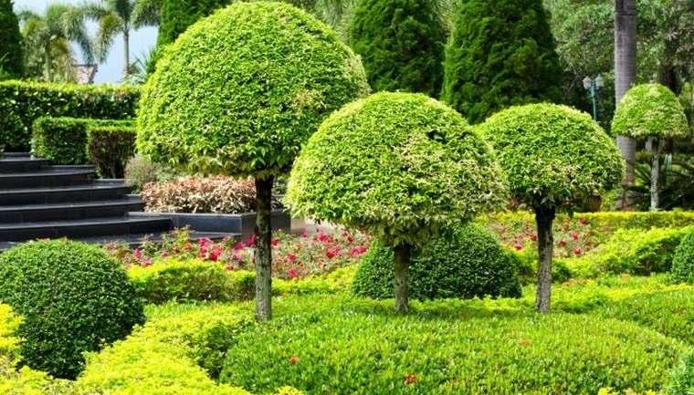 árboles para jardín con formas topiarias