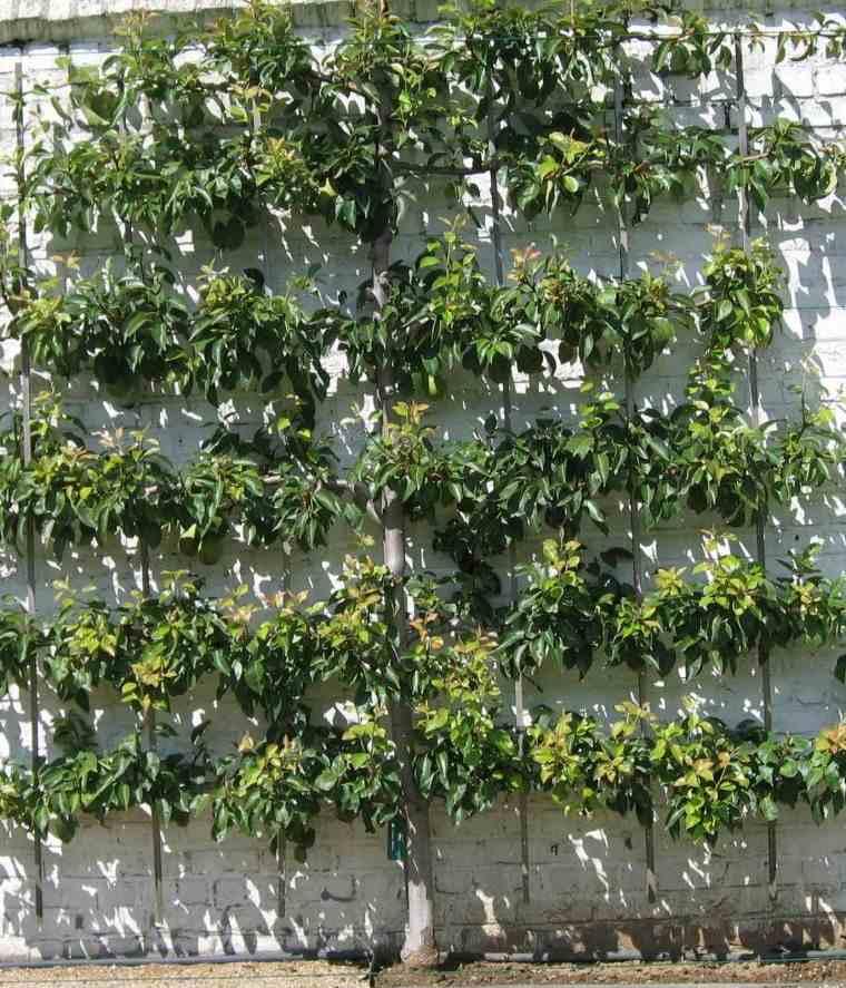 árboles para jardín manzano en espaldilla