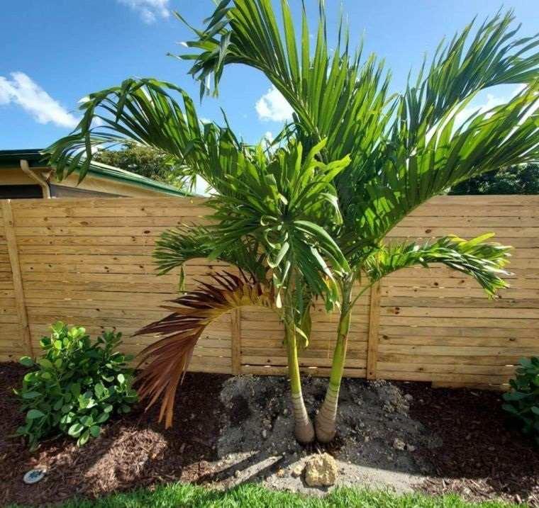 árboles para jardín palmeras