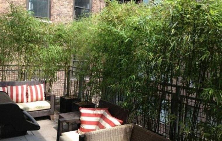 cómo cerrar una terraza sin obra con planta bambu