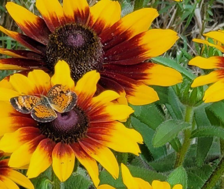 flores de otoño girasoles de ojo de buey