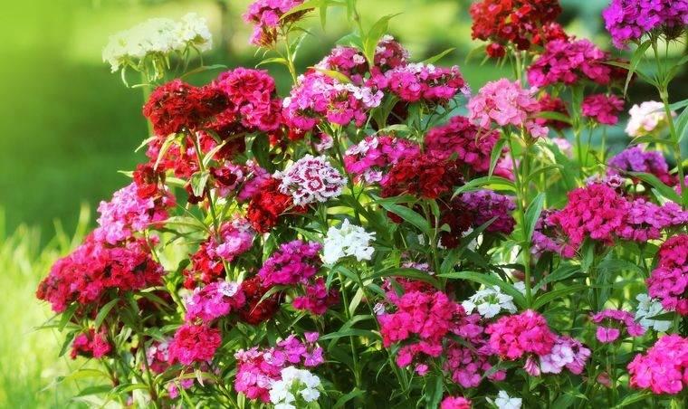 flores de otoño para jardin