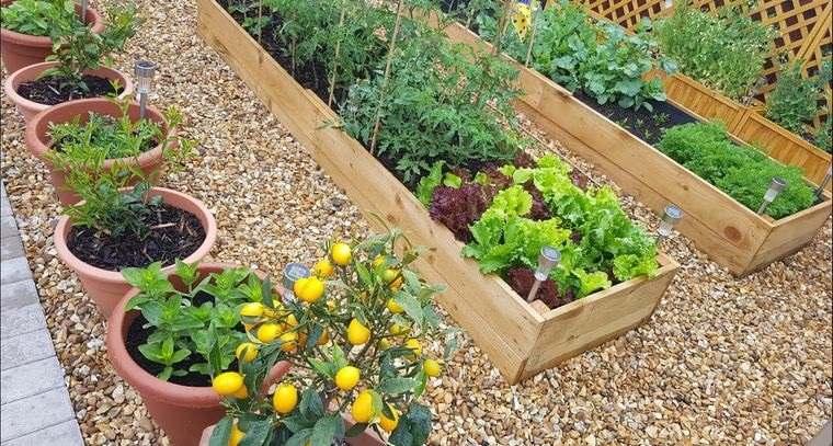 huerto ecológico en casa actividad saludable