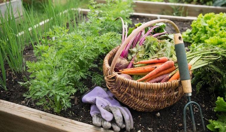 huerto ecológico en casa beneficios