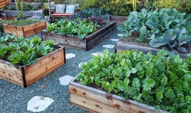 huerto ecológico en casa diversos cultivos