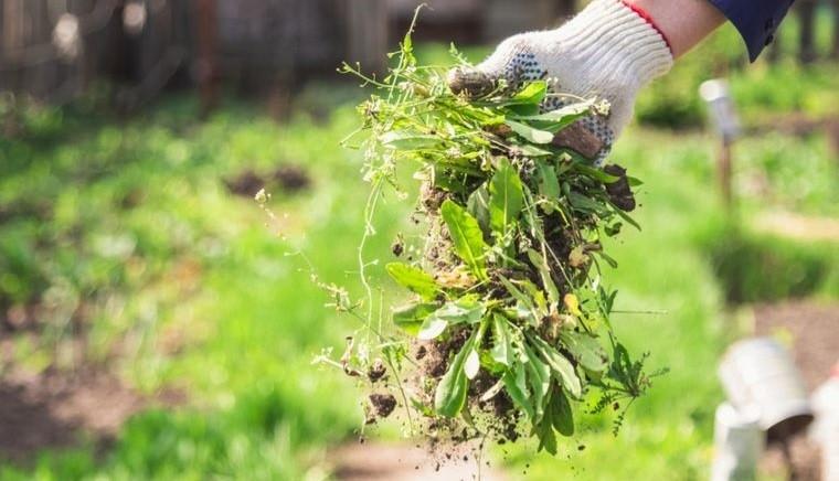 huerto ecológico en casa limpiar jardin