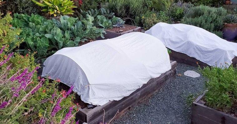 huerto ecológico en casa proteccion contra heladas