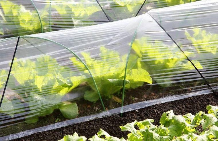 huerto ecológico en casa proteccion de cultivo