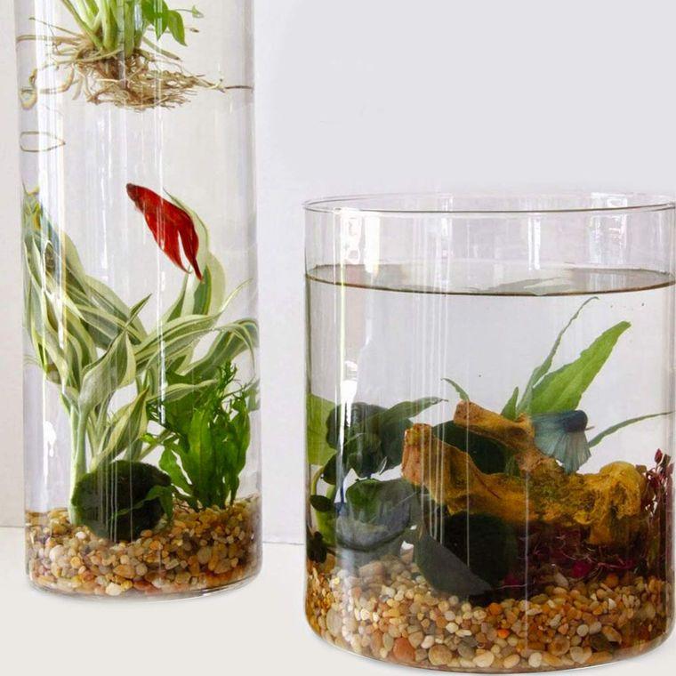 jardín acuático con pequeño pez