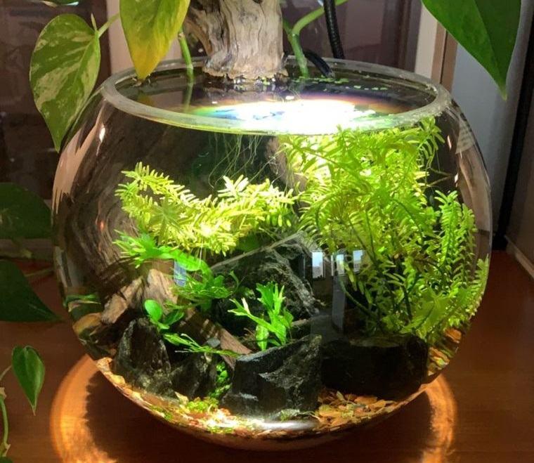 jardín acuático de bricolaje para interiores