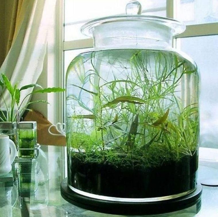 jardín acuático en recipiente de vidrio