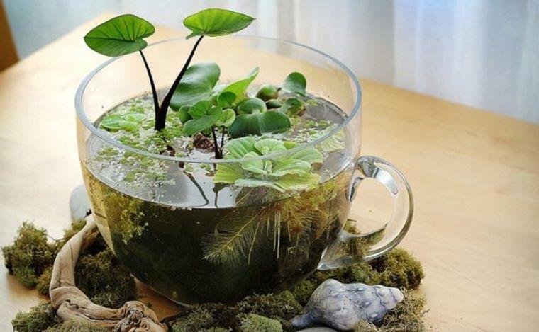 jardín acuático en recipiente original
