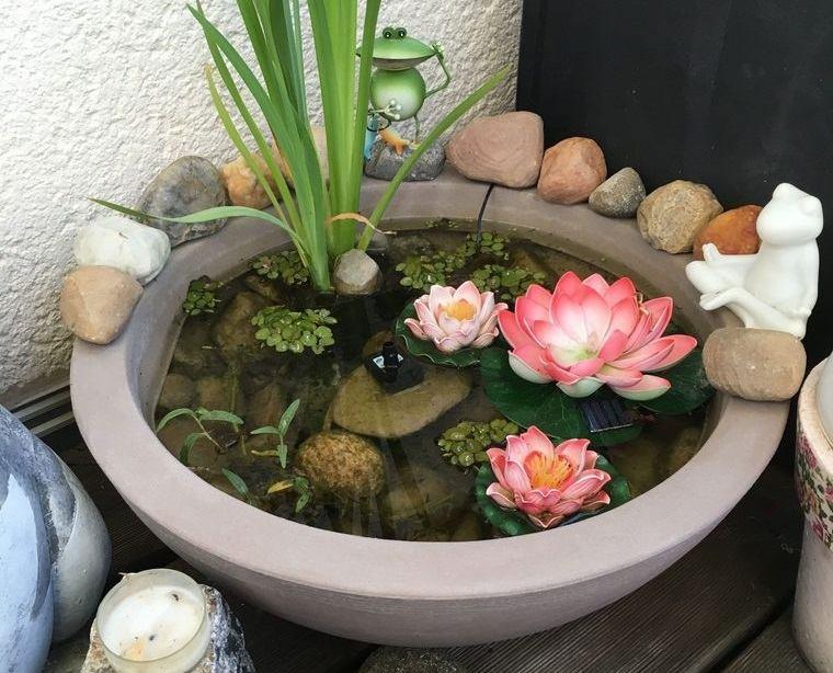 jardín acuático en recipiente pequeño
