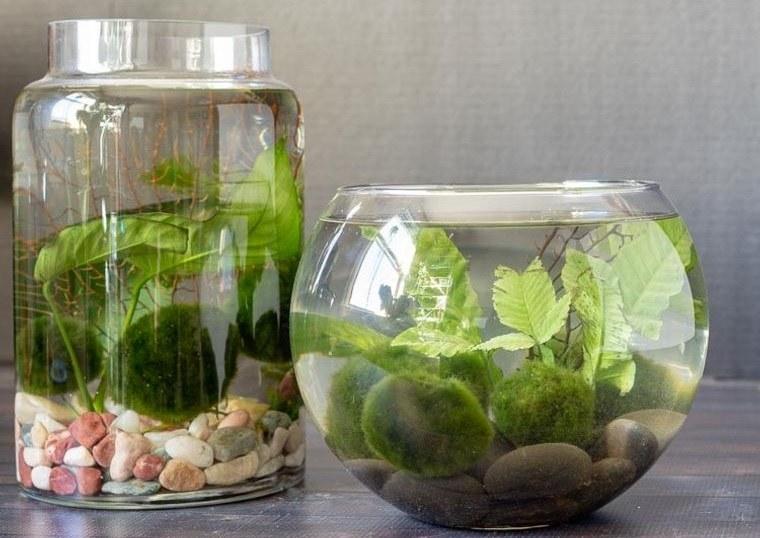 jardín acuático en recipiente transparente