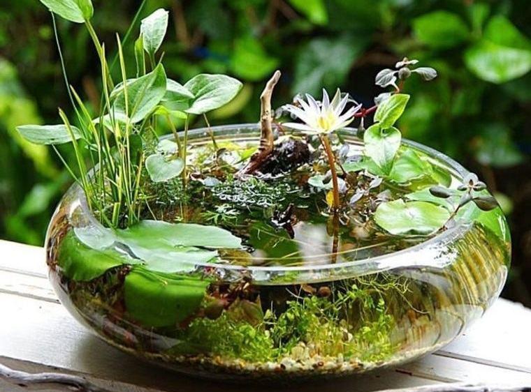 jardín acuático facil de hacer