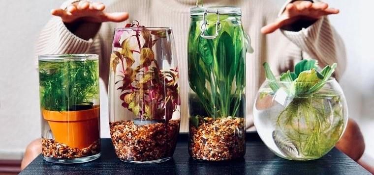 jardín acuático proyecto creativo