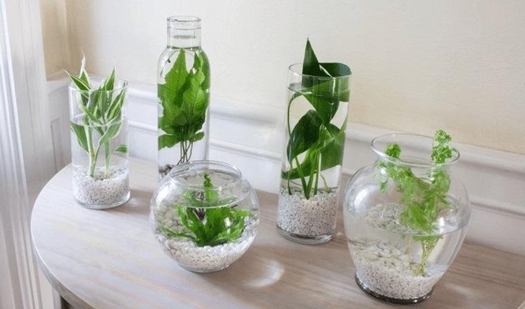 jardín acuático proyecto relajante