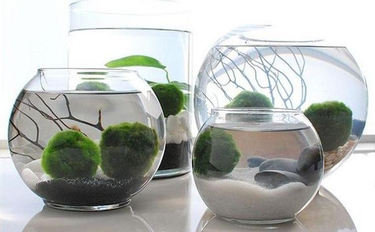 jardín acuático sencilla elegancia