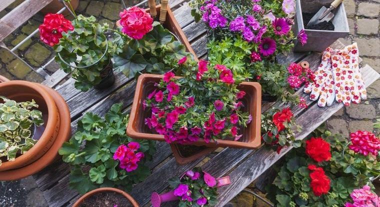 plantas de verano alegre jardin