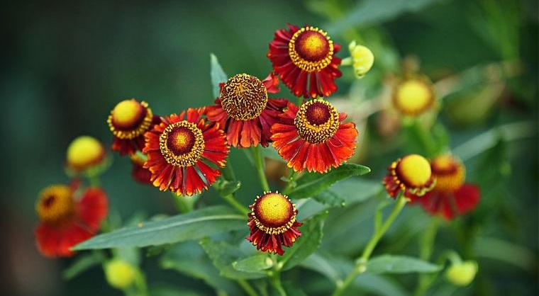 plantas de verano estornudo