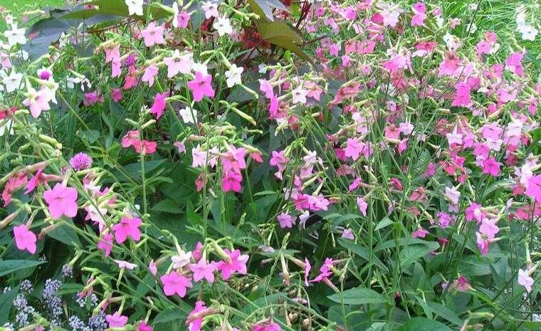 Plantas de verano para agregar color y alegría a tu espacio al aire libre