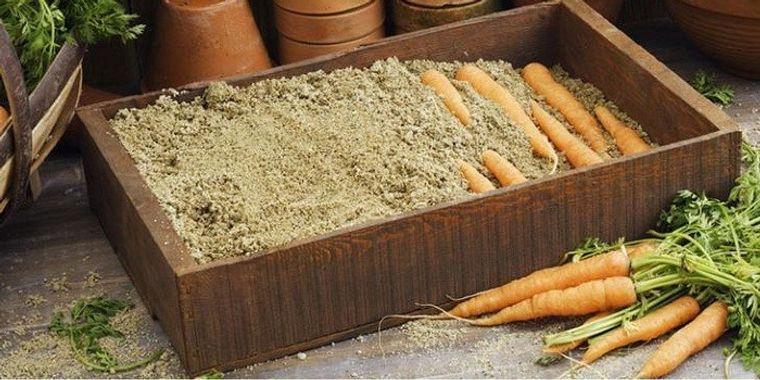 conservar zanahorias almacenamiento en caja