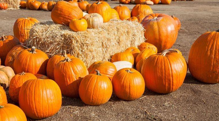 decoración de halloween elegir calabazas